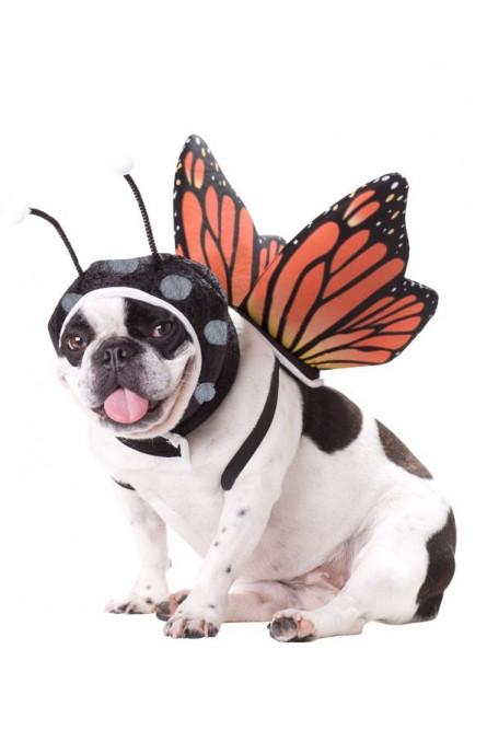 Костюм для собаки Бабочка