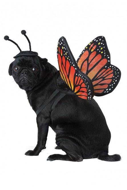 Костюм бабочки для собаки