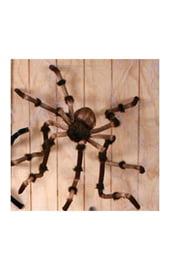 Коричневый гигантский паук 240 см