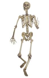 Пластмассовый скелет 160 см