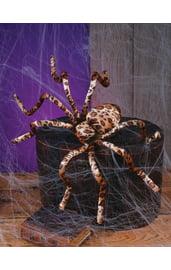 Бархатный паук леопардовой расцветки