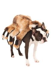 Костюм страшного паука для собаки