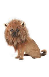 Грива льва для собаки