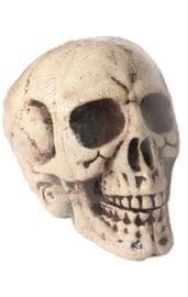 Огромный череп