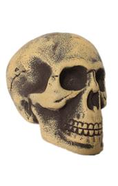 Старый череп