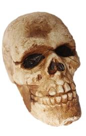 Состаренный череп