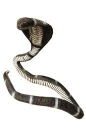 Большая черная змея