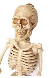 Скелет 105 см
