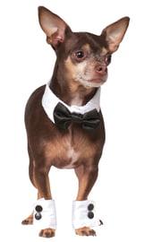 Костюм Стильного Мистера для собаки
