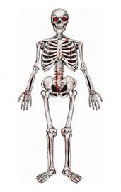 Декорация Картонный скелет